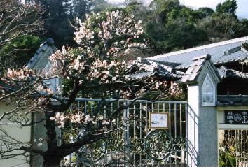 英勝寺の見どころ